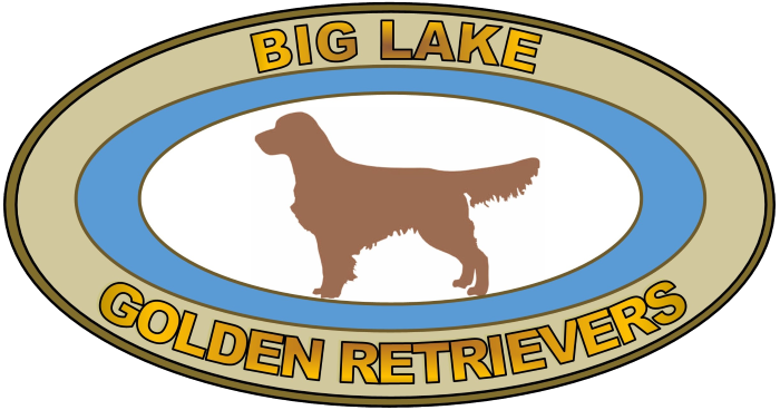 Big Lake Golden Retrievers